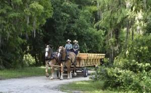 Disney's Fort Wilderness Resort Wagon ride