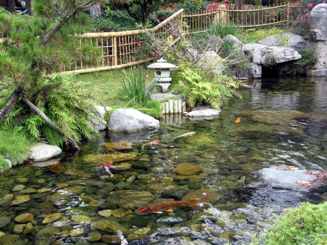 The gallery for japanese koi pond for Japan koi fish pond